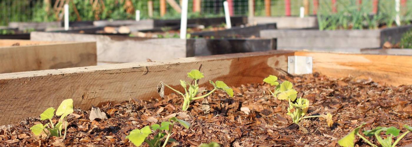 garden at West Campus